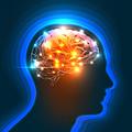 Gehirn8_2